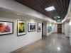 zoo-corridor-wide-art-2-web